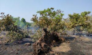 रहाटेश्वर येथील माळावर आग लागल्याने लाखो रुपयांचे नुकसान