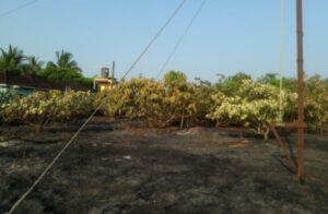 विद्युत स्पार्किंगमुळे चिंदर सडेवाडीत कलम बागेला आग लागून नुकसान…