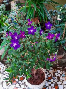 Read more about the article राजकुमारी फुल..