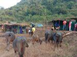 शिराळे झाले सुनेसुने : गावच्या गावपळणला सुरुवात