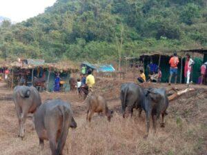 Read more about the article शिराळे झाले सुनेसुने : गावच्या गावपळणला सुरुवात