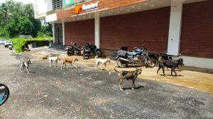 """कणकवलीत ५६७ कुत्र्यांचे """"निर्बीजीकरण"""" व """"अँटी रॅबीज"""" लसीकरण…"""