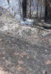 मडुरा येथे काजू बागायतीला शॉर्टसर्किटमुळे आग…
