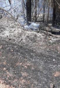 Read more about the article मडुरा येथे काजू बागायतीला शॉर्टसर्किटमुळे आग…