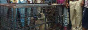 अखेर 'त्या' संकुलातील नागरिकांची माकडाच्या त्रासातून सुटका