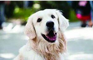 Read more about the article महापौर यांच्या घरातील कुत्रा म्हणून जन्म व्हावा , प्रसिद्ध दिग्दर्शकाने व्यक्त केलेली इच्छा
