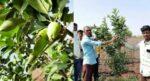 सफरचंदाची शेती आता उष्ण वातावरणातही…
