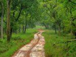 मुख्य वनसंरक्षकावर आर्थिक देवाण-घेवाणीचा आरोप…