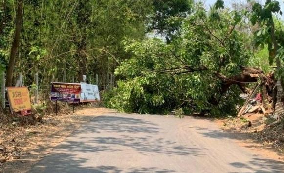 मळगाव येथे रस्त्यावर भलेमोठे कोसळले  झाड…
