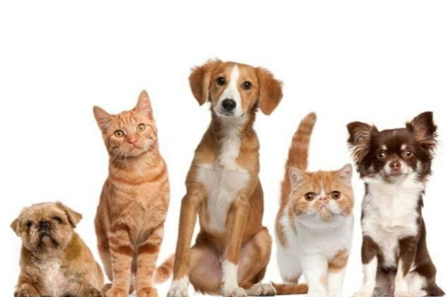 गृहनिर्माण संस्थेमधील पाळीव प्राण्यांच्या मालकांचे हक्क आणि कर्तव्य