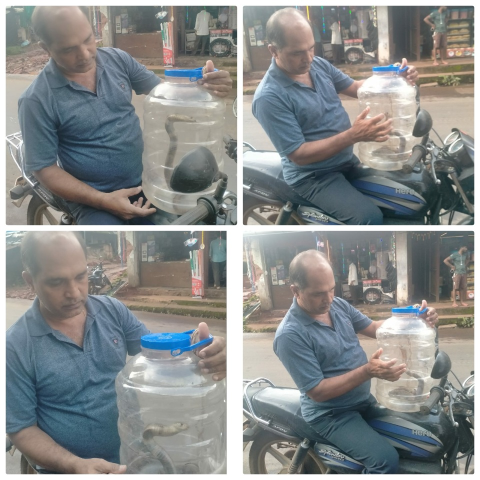 You are currently viewing सर्पमित्र संजय नेरुरकर…. फोंडाघाट वासीयांचा अभिमान